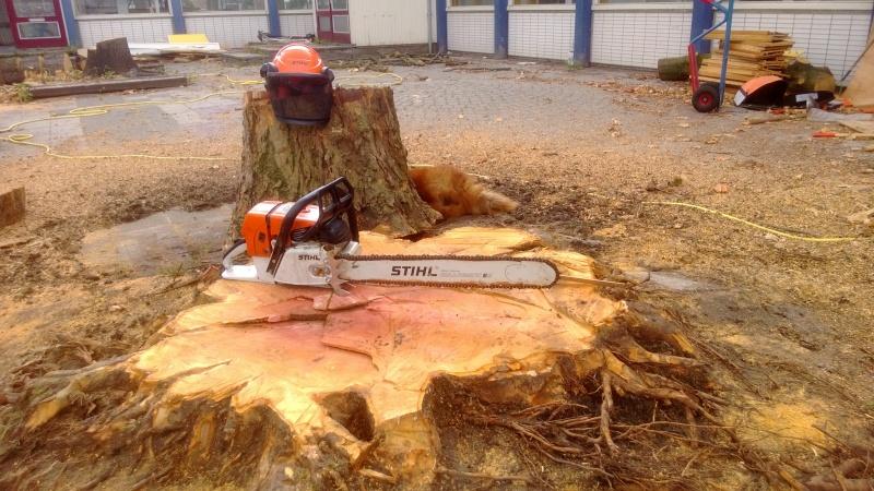 BOOMLOPER - Bomen zagen